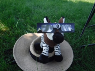 stuffed zonkey watching the eclipse with safety glasses